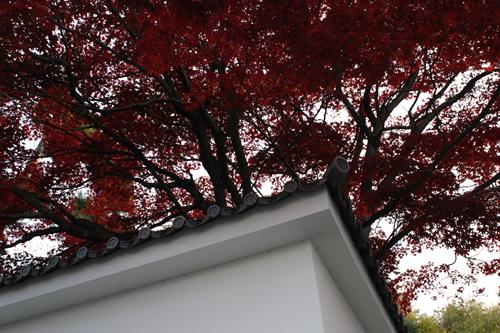 20101128_kyoto1.jpg