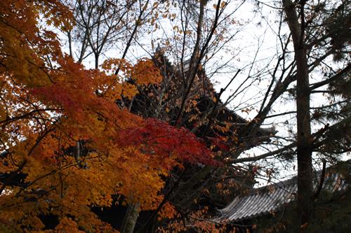 20101128_kyoto2.jpg