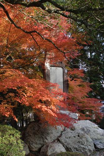 20101128_kyoto3.jpg