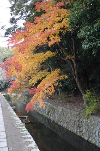 20101128_kyoto4.jpg