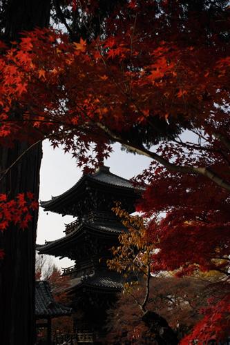 20101128_kyoto8.jpg