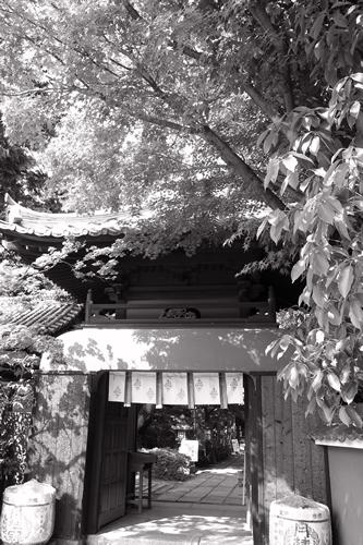 20080503fushimi_01.jpg